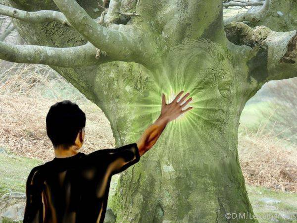 Energie des arbres 1